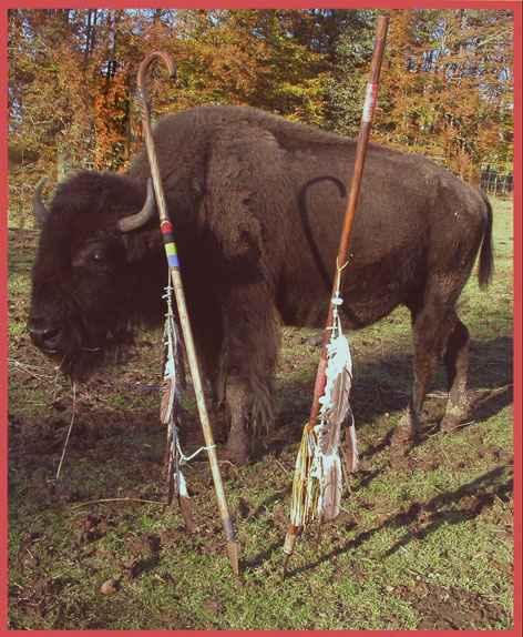 BUFFALO WITH LANCES